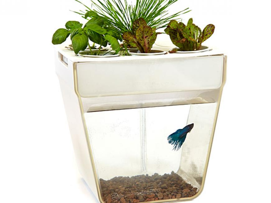 Aquafarm - Unique Fish Garden